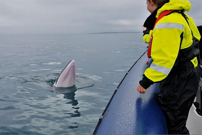2-Hour RIB Boat Whale Watching Tour from Reykjavik