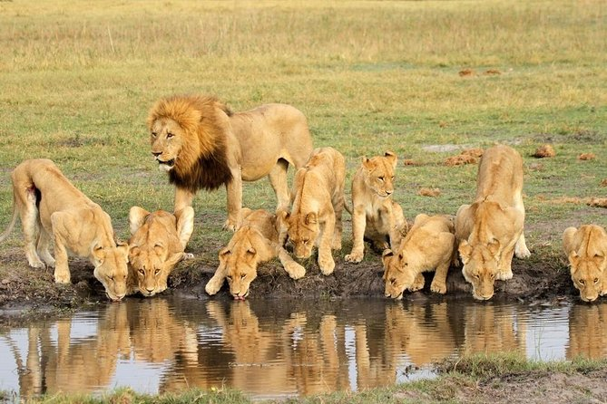 5 Day Join Group Serengeti, Ngorongoro, Tarangire and Lake Manyara photo 7