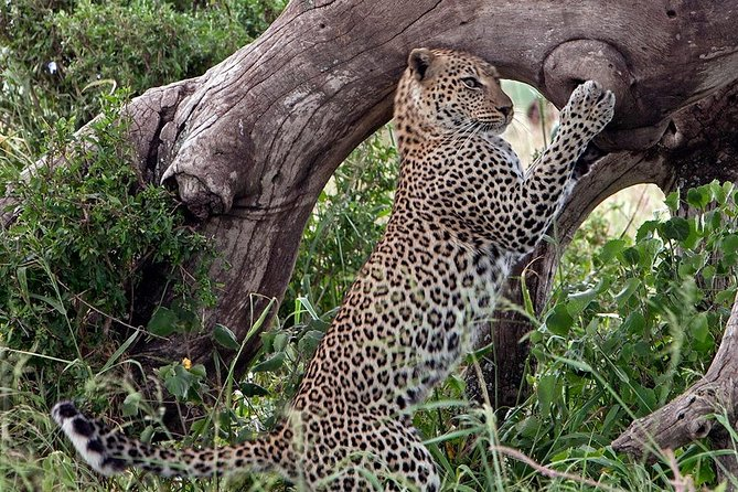 5 Day Join Group Serengeti, Ngorongoro, Tarangire and Lake Manyara photo 2