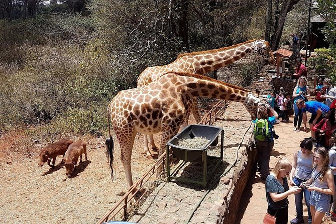 Nairobi National park,Elephant orphange,Giraffe center &Karen BLIXEN