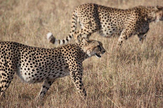 Serengeti Wildebeest Migration Safari