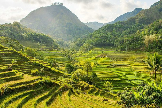 Selogriyo Temple Tour & Trek Through Java's Scenic Rice Terraces