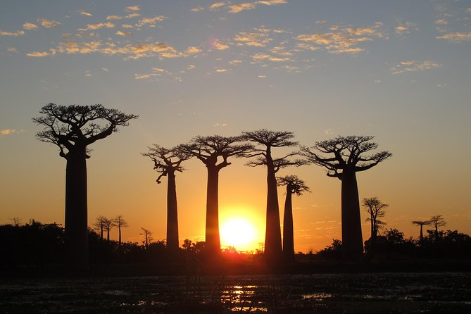 Madagascar 7 Days Baobabs and Lemurs Tour