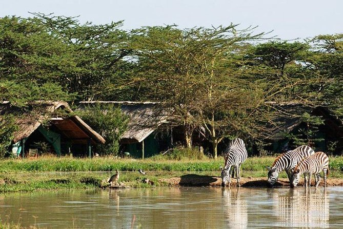 6 Days Samburu Sweetwaters Lake Nakuru & Lake Naivasha Wildlife Safari