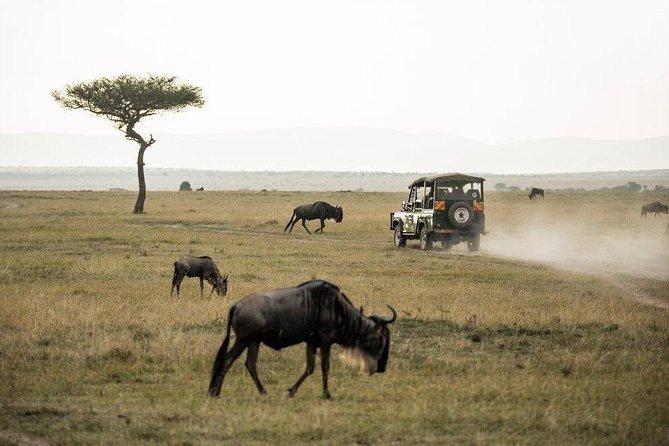 4 Days Masai Mara and Lake Nakuru National Park Private Luxury Safari