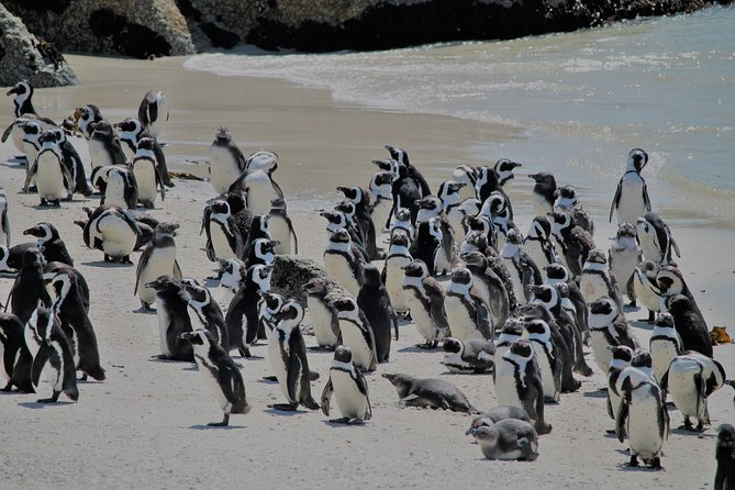 Supersaver: Cape of Good Hope and Cape Point Day Tour from Cape Town
