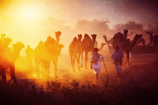 Experience the royal side of India at the iconic Pushkar 22 - 30 November 2020