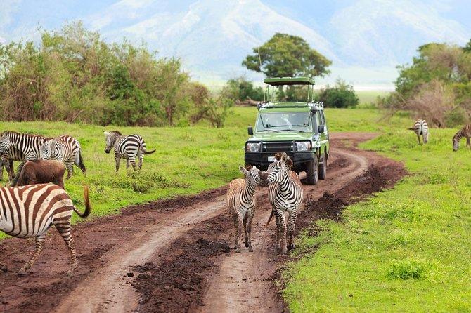 2 Days Maasai Mara Budget Safari (Daily Departure + 24h Customer Service)