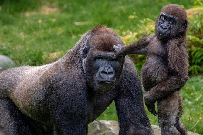 9 Day Fly-in Premier Wildlife and Gorilla Safari Retreat Uganda