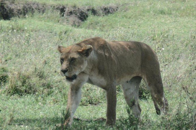 5 Days African Lion Safari – High End