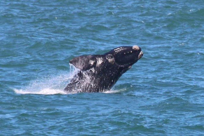 Whale Tour