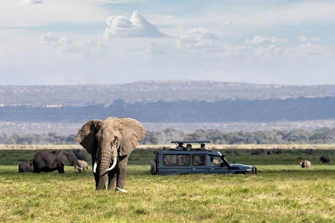 Group Single day safari
