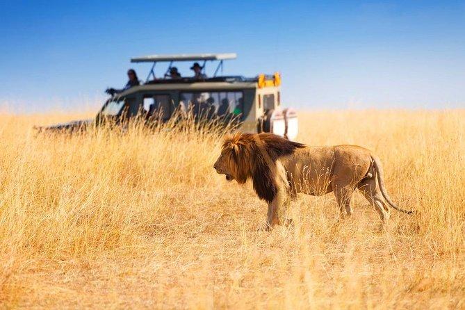 3 Days Masai Mara Swift Adventure