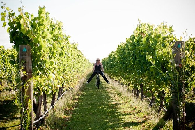 Cape Winery Cycle Tour - 6 wineries, self-guided