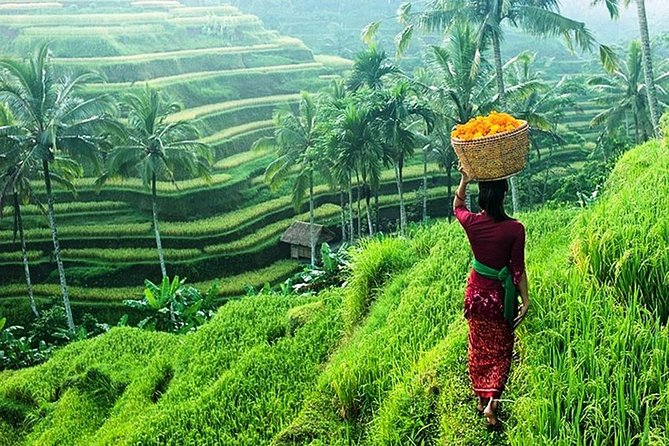 Ubud Tour - Jungle Swing - Rice Terrace - WaterFall - Ancient Temple - Free WiFi photo 4