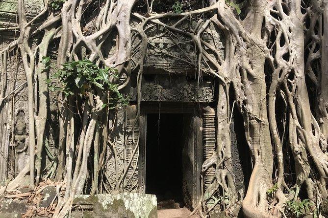 The strangler fix tree at the Ta Prohm (Tomb Raider)