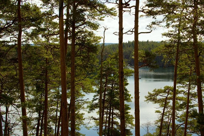 Premium nature hike of Estonia (limited few free spots) photo 4