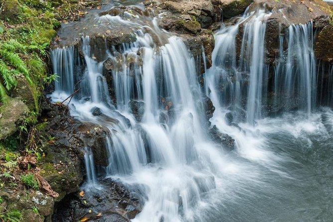 The Adventure Tour: Vallée des Couleurs & La Vanille Nature Parks & Gris Gris