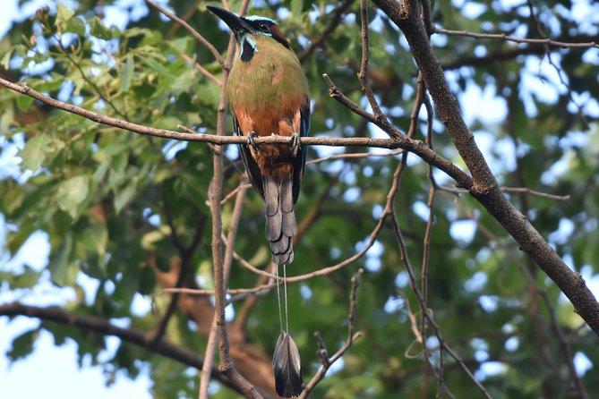 Private Bird Walking Tour in El Salvador
