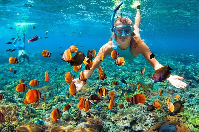 Sharm el-Sheikh: Snorkel & Camel Safari at Blue Hole