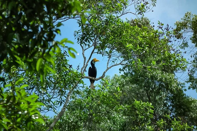 North Sumatra & Barumun Nagari Wildlife Sanctuary program