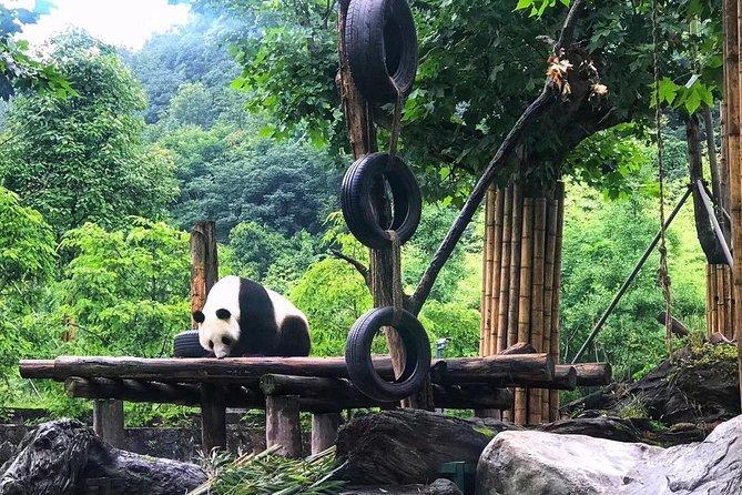 Chengdu Dujiangyan Panda Keeper Program Private Day Tour