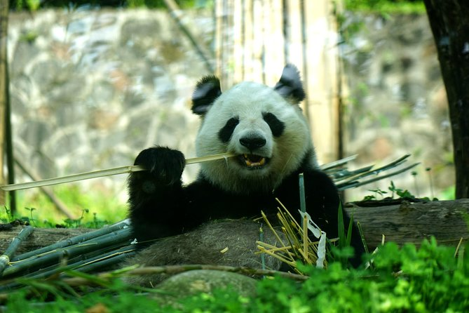 Excursion privée d'une journée complète à Chengdu et visite de l'élevage de pandas géants