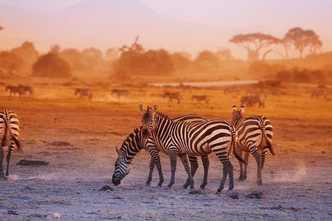 9 Days Kenya Photography Safari Adventure