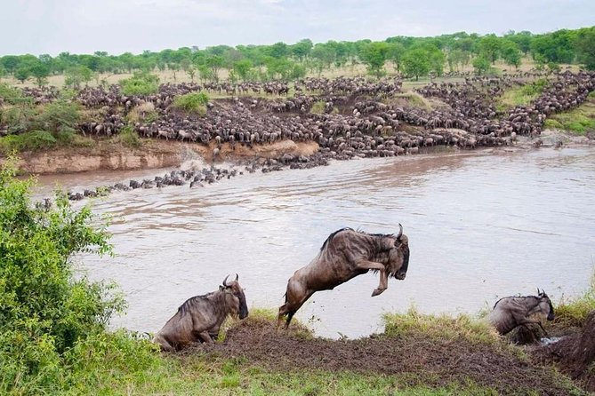 6 Days / 5 Nights Central Serengeti Migration Private Tour