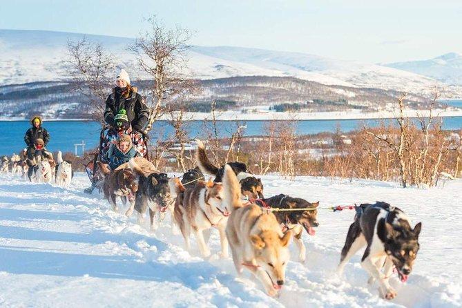 Tallinn Husky Dog Sledding