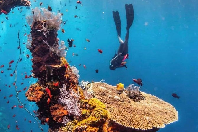 All Inclusive Bali Scuba Diving at Padangbai with Lunch and Transport