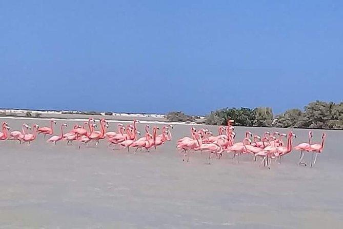 Private Tour: Pink Flamingos, Maya Temples and Ek Balam