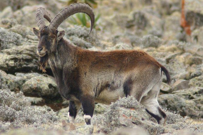 Simien Mountains National Park – 7 Day Trek