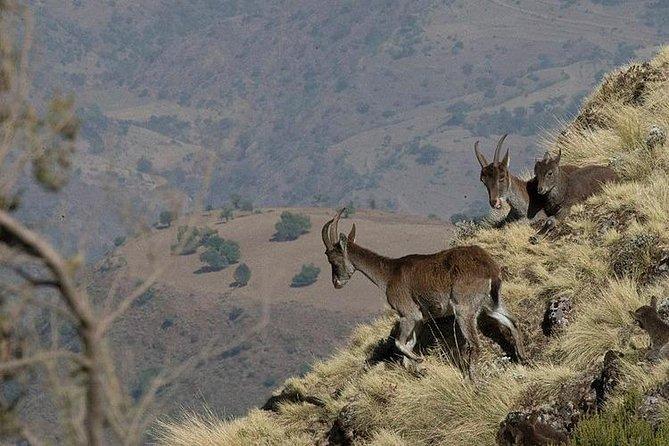 3 Days Simien Mountains Trekking