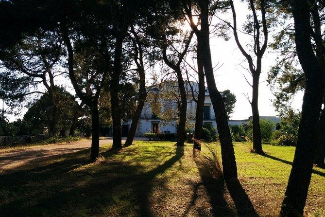 Learn Italian while discovering Puglia