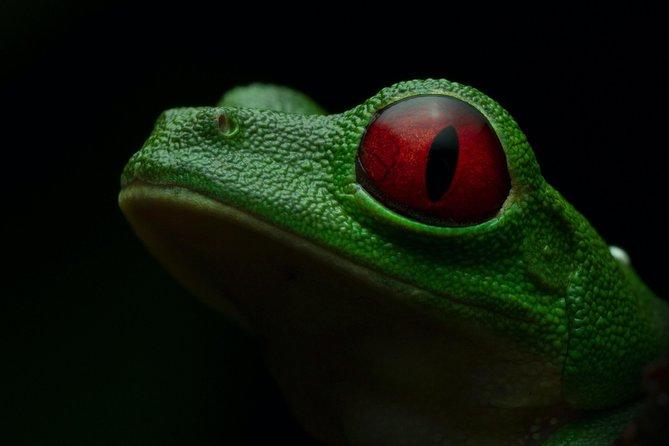 Manuel Antonio Herping Tour (Reptile & Amphibian)