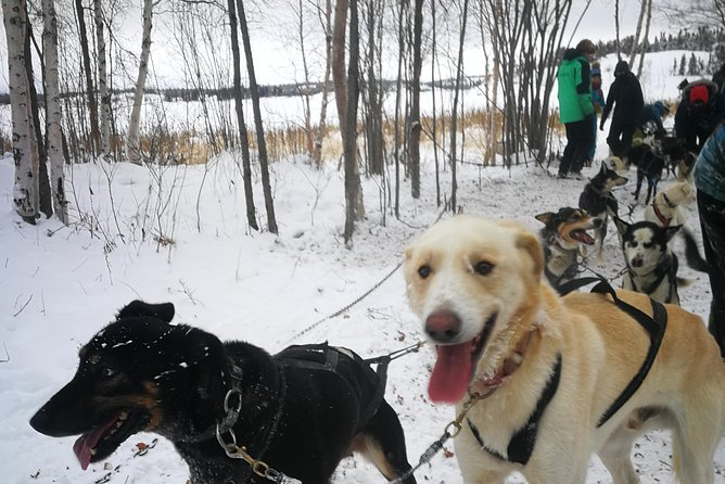 Dog Sledding photo 1