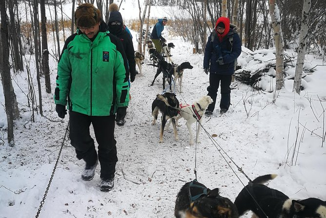 Dog Sledding photo 2