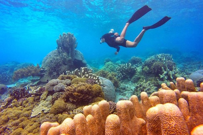 Day Tour Snorkeling in Nha Trang
