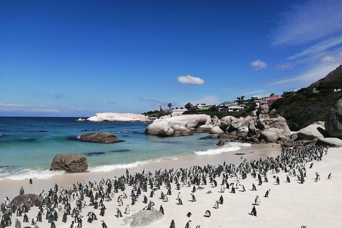 Private Tour : Cape Peninsula, Chapman's Peak and Penguin Colony
