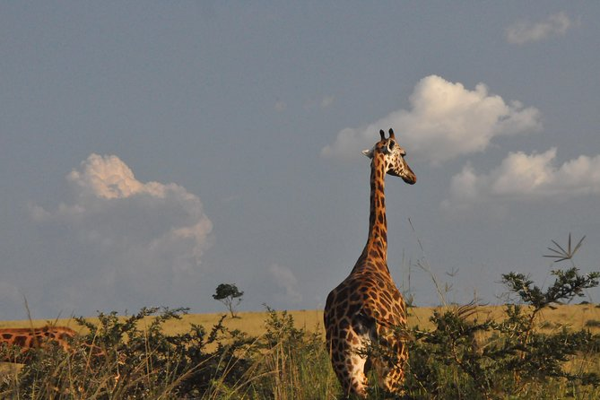 3 Days Murchison Falls National Park photo 1