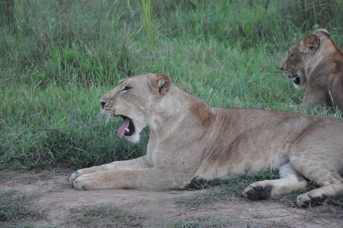3 Days Murchison Falls National Park photo 3