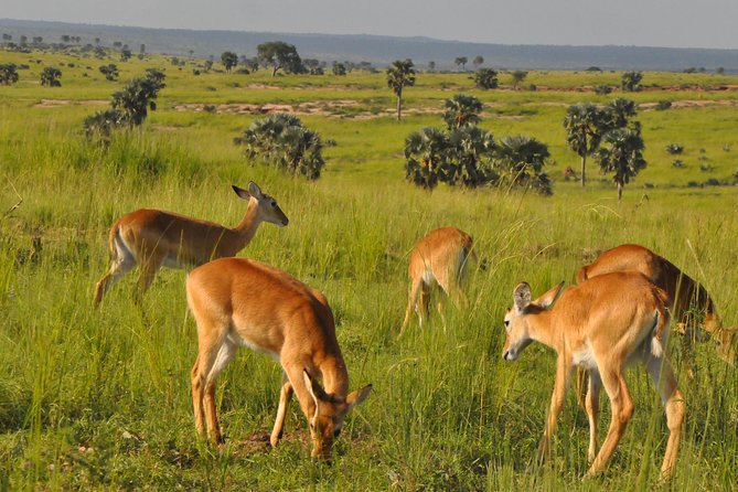3 Days Murchison Falls National Park photo 2