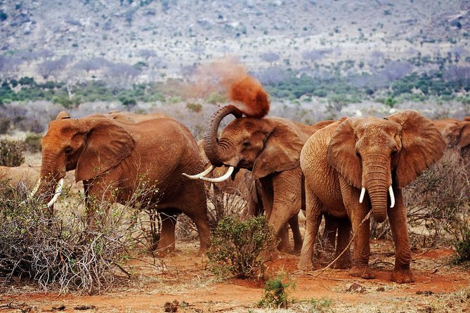 Best 7 Days Kenya Adventure Wildlife Safari