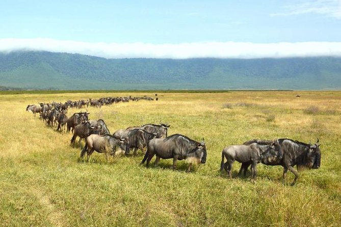 Ngorongoro Crater Day Trip