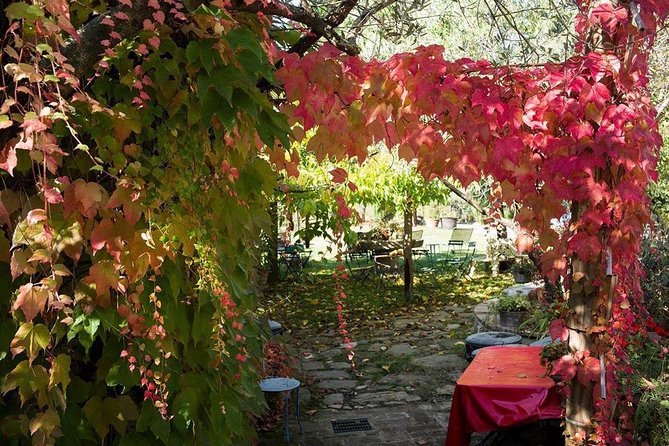Assisi, Deruta & organic gourmet lunch at the olive oil farmhouse from SIENA