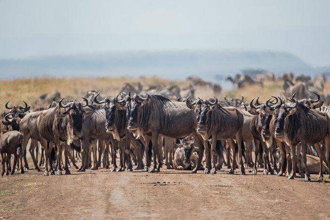 7 Days / 6 Nights Ndutu Wildebeest Migration Private Safari