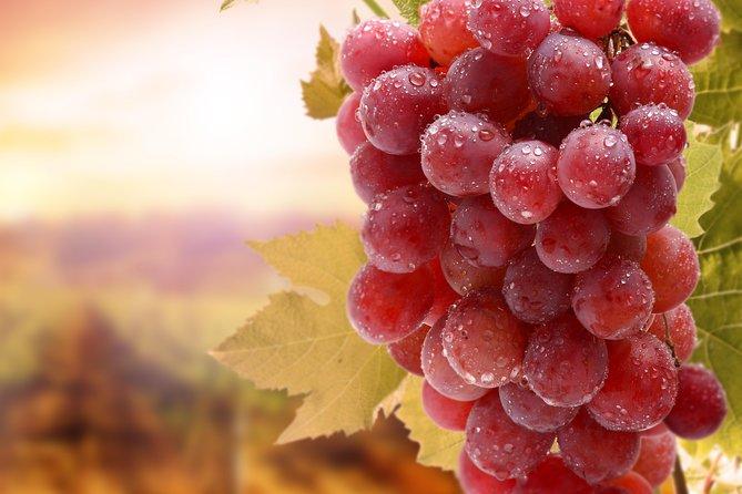 Private tour: Full day Wine tasting Naousa & Ag. Nikolaos