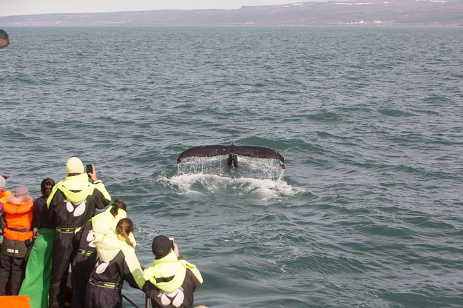 Whale Watching in Husavik photo 4