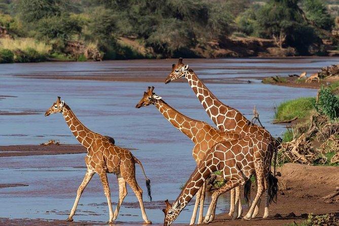 8 Days / 7 Nights Private Wildebeest Migration Safari